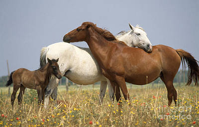 Photograph - Spanish Ponies by Duncan Usher