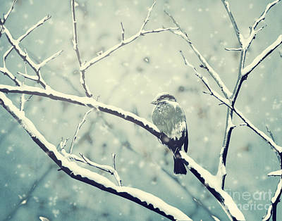 Snowfall Digital Art - Sparrow On The Snowy Branch by Jelena Jovanovic