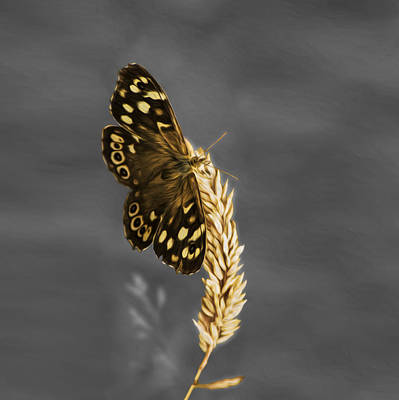 Photograph - Speckled Wood by Veli Bariskan