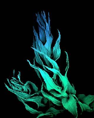 Sphagnum Moss Art Print by Louise Hughes