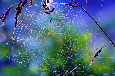 Spiderweb Photograph - Spider Web by Wladimir Bulgar