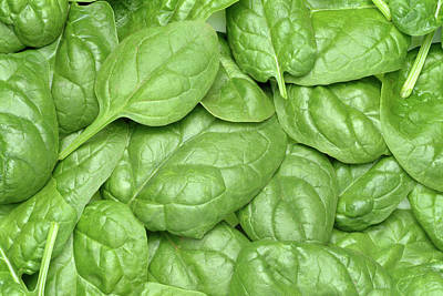 Spinach Leaves Art Print