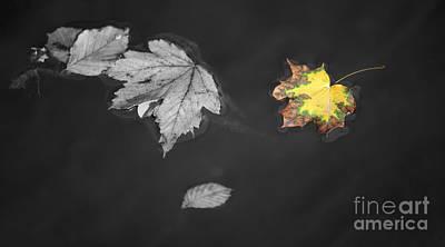 Splash Color Floating Autumnal Leaves Art Print