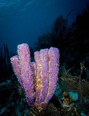 Photograph - Sponge Scenic by Jean Noren