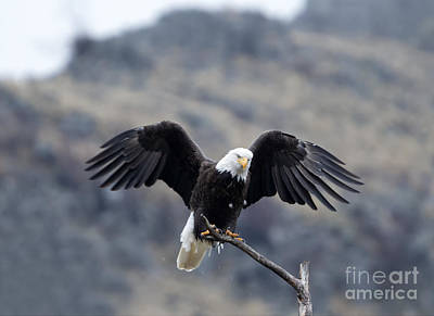 Landmarks Royalty-Free and Rights-Managed Images - Spread Your Wings by Mike Dawson