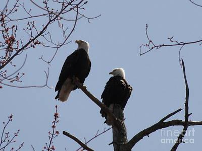 Photograph - Spring Bald Eagles 2013 Xiv by Daniel Henning