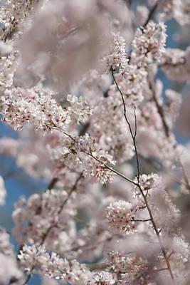 Photograph - Spring Bloom by Alex Grichenko