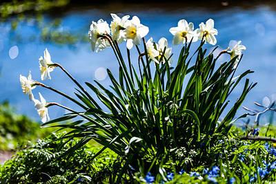 Dreamy Pink Park Scene Photograph - Spring Daffodils. Park Keukenhof by Jenny Rainbow