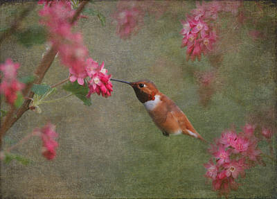 Rufous Wall Art - Photograph - Spring Delight by Angie Vogel
