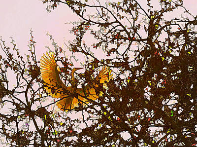Photograph - Spring Flight by Melinda Hughes-Berland