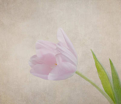 Photograph - Spring Is In The Air by Kim Hojnacki