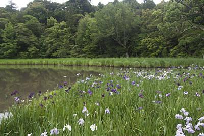 Photograph - Spring Lake by Masami Iida