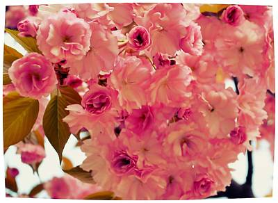 Photograph - Spring Pom Poms by JAMART Photography
