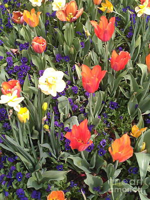 Photograph - Spring by Sherri Williams