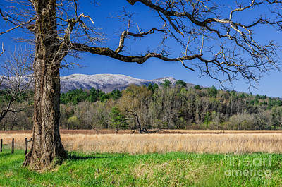 Photograph - Spring Snow by Anthony Heflin