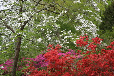 Photograph - Spring Splendor by Living Color Photography Lorraine Lynch