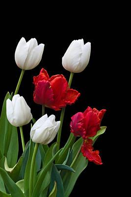 Spring Tulips Art Print by Jane McIlroy