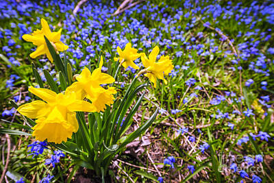 Daffodil Photograph - Spring Wildflowers by Elena Elisseeva