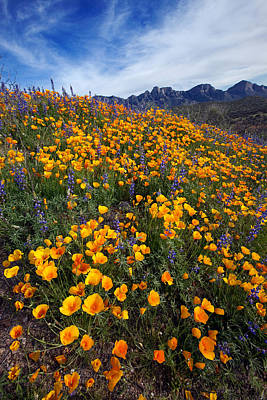 Tucson Photograph - Spring Wildflowers by Susan  Degginger