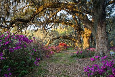 Photograph - Springtime At Magnolia Plantation 10 by Walt  Baker