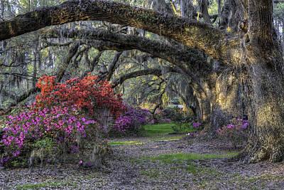 Photograph - Springtime At Magnolia Plantation 19 by Walt  Baker