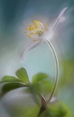 Beginnings Photograph - Springtime by Heidi Westum