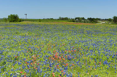 Photograph - Springtime In Texas 1 by Stephen Anderson