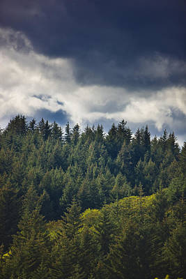 Spruce Tree Forest, Chiniak Bay, Kodiak Art Print