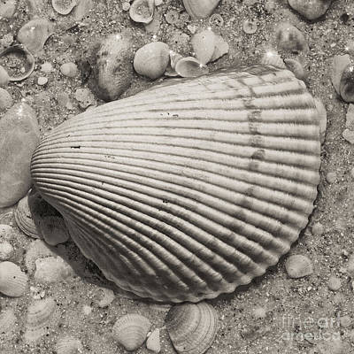 Hobbies And Collections - Art And Photograph - Square Sepia Seashell by Birgit Tyrrell
