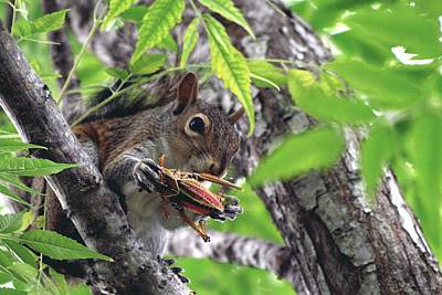 Photograph - Squirrel Eating Grasshopper by Ira Runyan