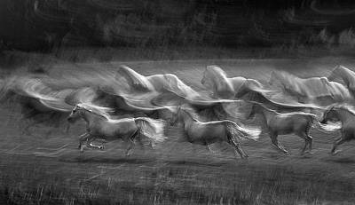 Wild Horse Photograph - Stampedo by Milan Malovrh