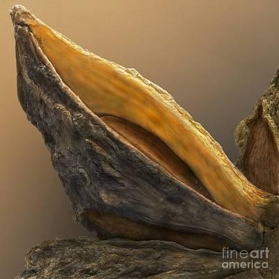 Aniseed Photograph - Star Anise, Sem by Cheryl Power