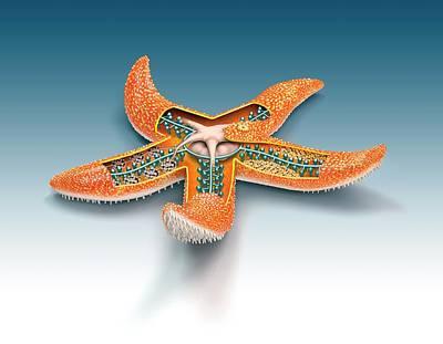 Starfish Anatomy Art Print by Mikkel Juul Jensen