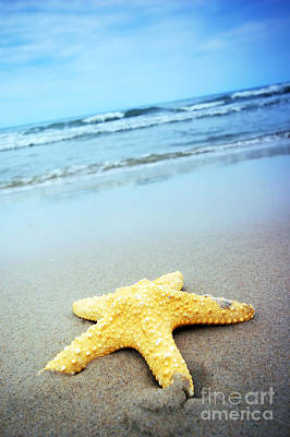 Star Photograph - Starfish by Michal Bednarek