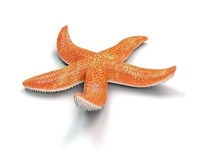 Starfish Art Print by Mikkel Juul Jensen