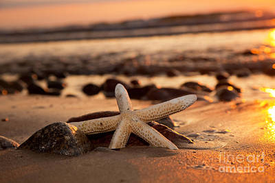 Starfish On The Beach At Sunset Art Print