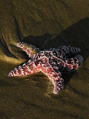 Photograph - Starfish by Robert Lozen