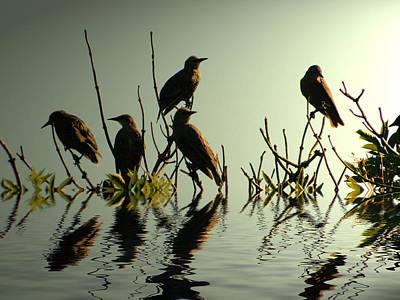 Starling Sunset Art Print by Sharon Lisa Clarke