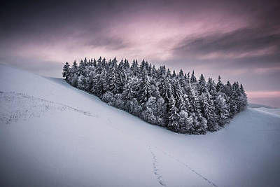 Winter Trees Photograph - Staying Together by Andreas Wonisch