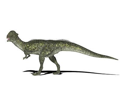 Paleozoology Photograph - Stegoceras Dinosaur by Friedrich Saurer