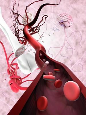 Stem Cells And Tissue Types Art Print