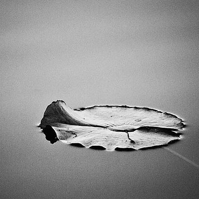 Monochrome Photograph - Stillness  by Scott Pellegrin