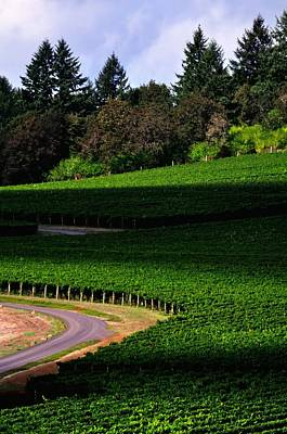 Jerry Sodorff Royalty-Free and Rights-Managed Images - Stoller Vineyard Roads 19050 by Jerry Sodorff