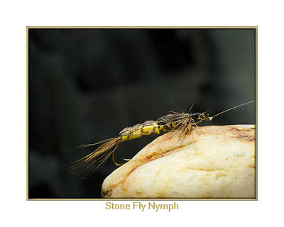 Stone Fly Nymph Art Print by Neal Blizzard