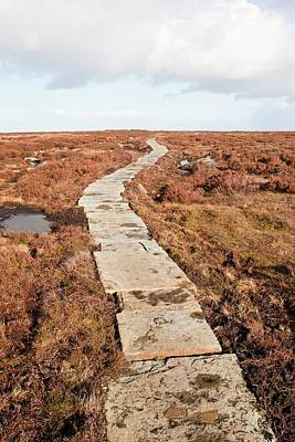 Stone Path Over Peatland Art Print by Ashley Cooper