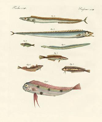 Oder Drawing - Strange And Beautiful Fish by Splendid Art Prints