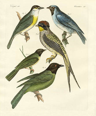 Canary Drawing - Strange Birds by Splendid Art Prints