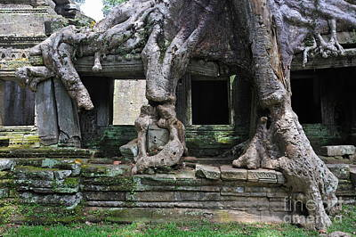 Photograph - Strangler Fig Tree Roots On Preah Khan Temple by Sami Sarkis