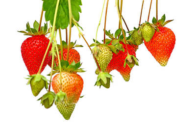 Photograph - Strawberries by Borislav Marinic