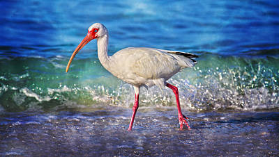 Ibis Wall Art - Photograph - Strolling by Betsy Knapp